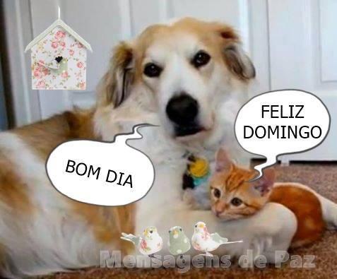 Frases De Bom Dia E Bom Domingo Para Compartilhar No Facebook E